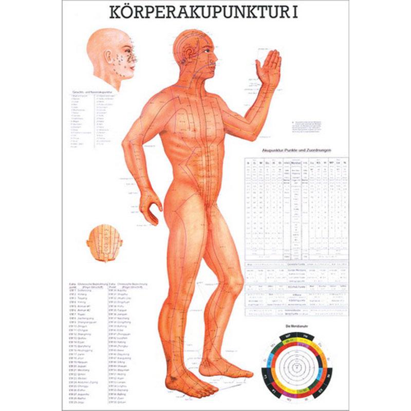 Rüdiger Anatomie Physio-Bedarf