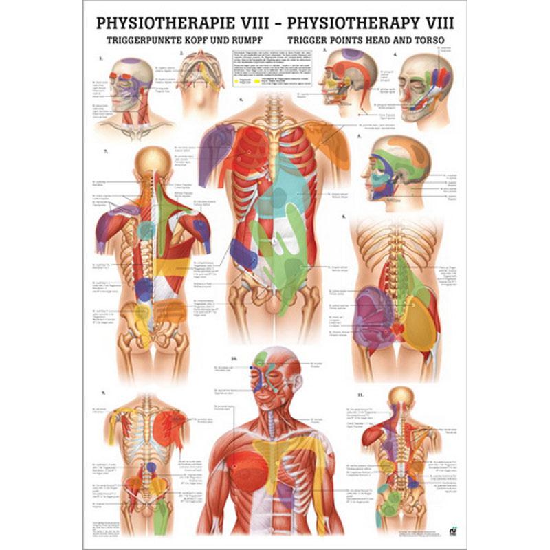 Physiotherapie Viii Triggerpunkte Kopf Rumpf Miniposter